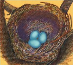 Tinamou nest
