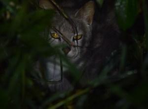 Sa Isidro cat (4)