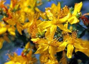 blossom 374511 1280 300x217 - Depressione post parto quali rimedi naturali utilizzare