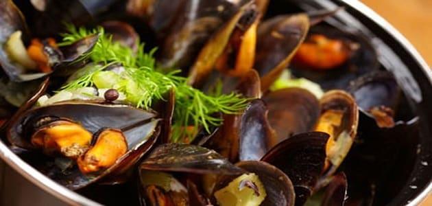 ما الذي يؤكل من أنواع الأصداف البحرية ماميتو