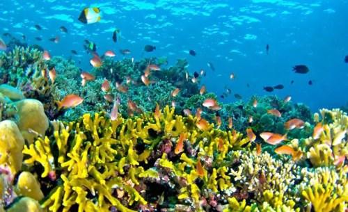 Bunaken, Sejatinya Taman Laut