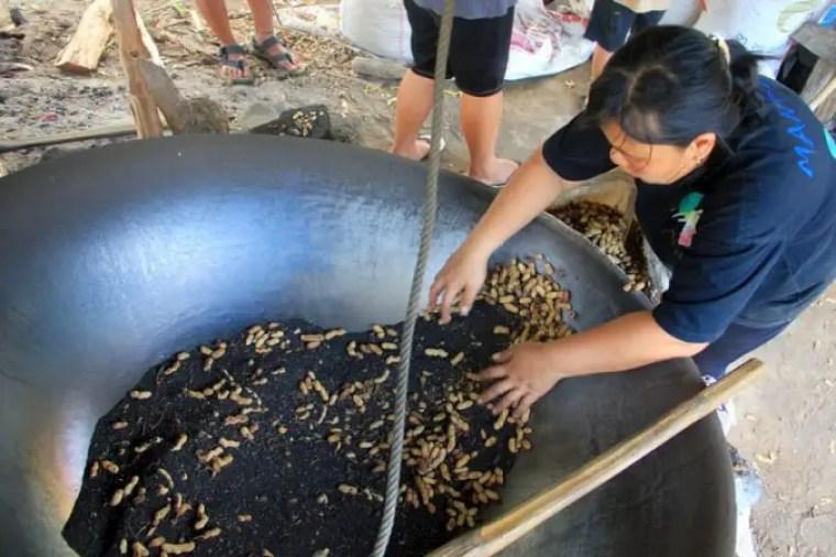 proses sangrai kacang kawangkoan