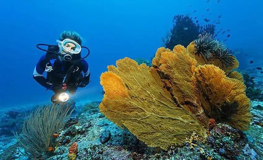seorang diver di perairan pulau gangga (by yooniqimages.com)