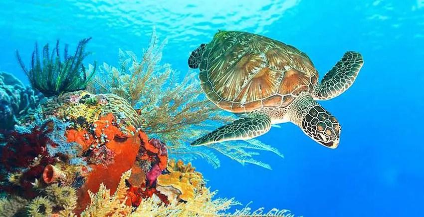 taman laut bunaken andalan manado menyambut traveler milenial