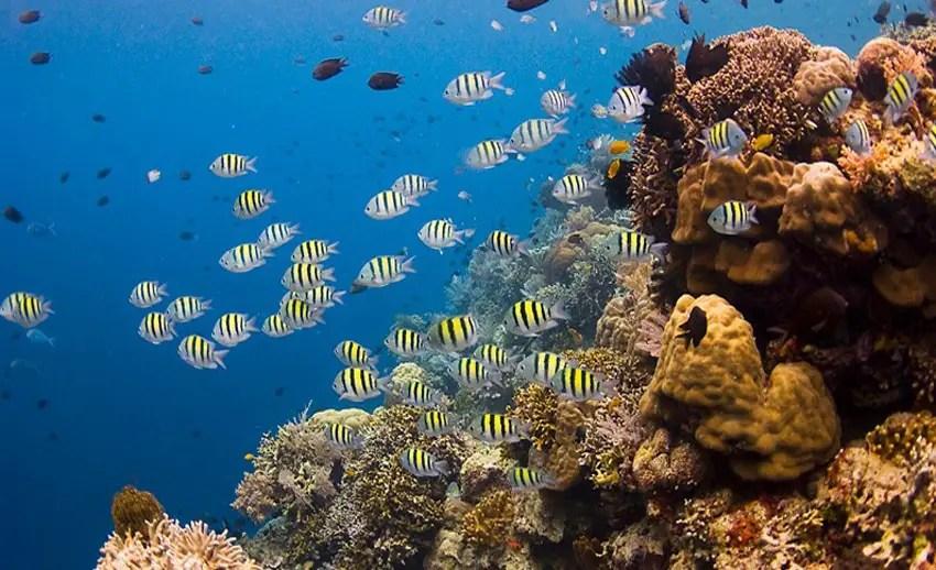 terumbu karang cantik di bawah laut siladen