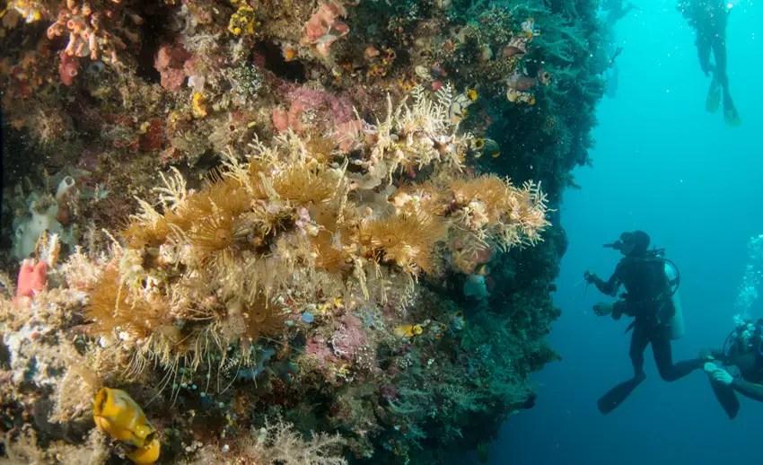 underwater great wall atau hanging walls spot selam memukau di bunaken