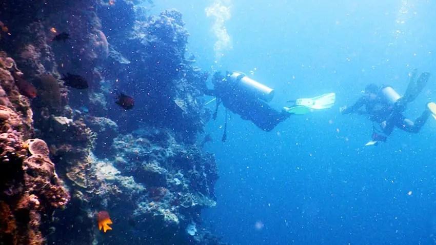 underwater great walls cuma ada di taman laut bunaken