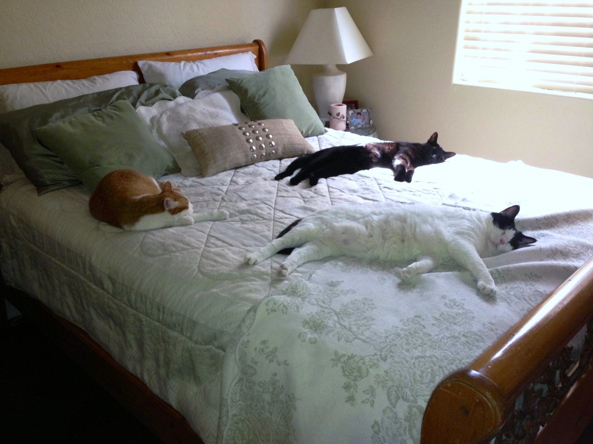 Weekly Pet Pic My Three Comfy Cats