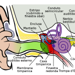 Auditory Sensation – Working process of ear | General Psychology