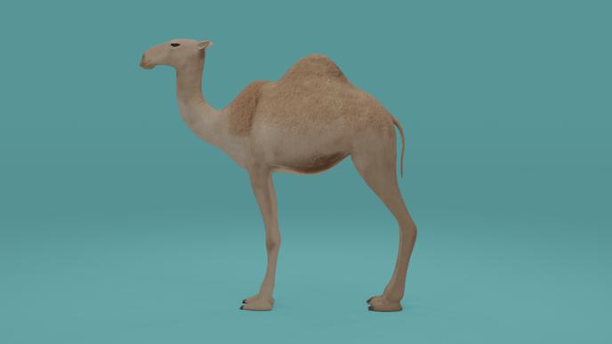 Camel - Blender - Eevee