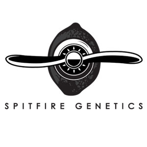 Spitfire Genetics
