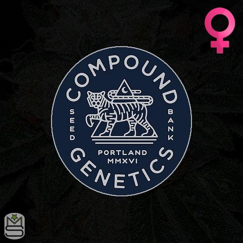 Compound Genetics - Feminized