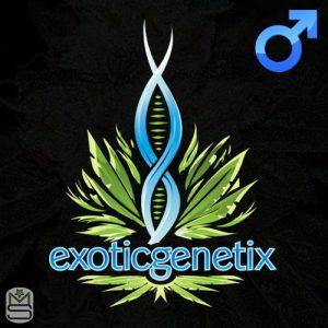 Exotic Genetix – It's It