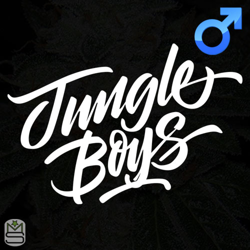 Jungle Boys - Regular