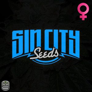 SinCity Seeds – Blueberry Squirt