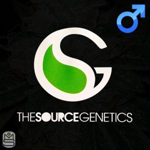 The Source Genetics – Uncirculated OG x Schrom x PSA