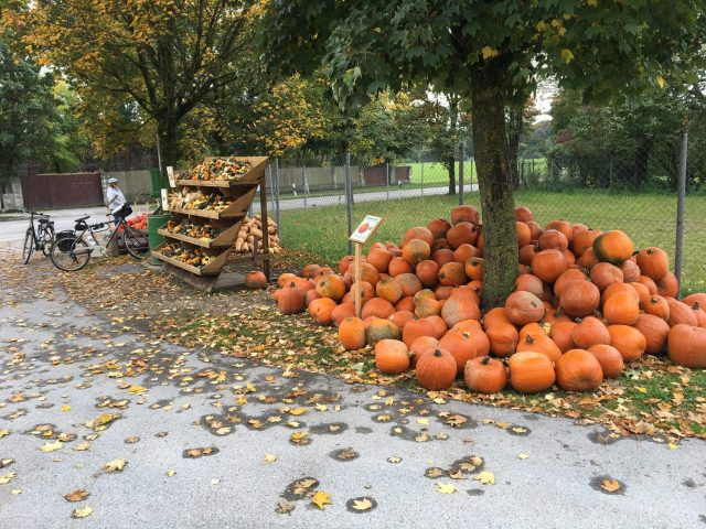 Pumkins for sale along Germany's Romantic Road