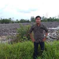 Hutan Mangrove di Sumut Kian Kritis