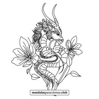 mandala de dragón