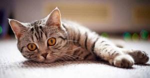 Datos curiosos de los gatos 1