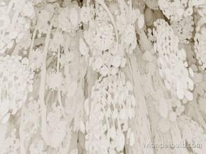 """Myconid Forest"" 3D Fractal Art, By Matthew Haggett, 2012"