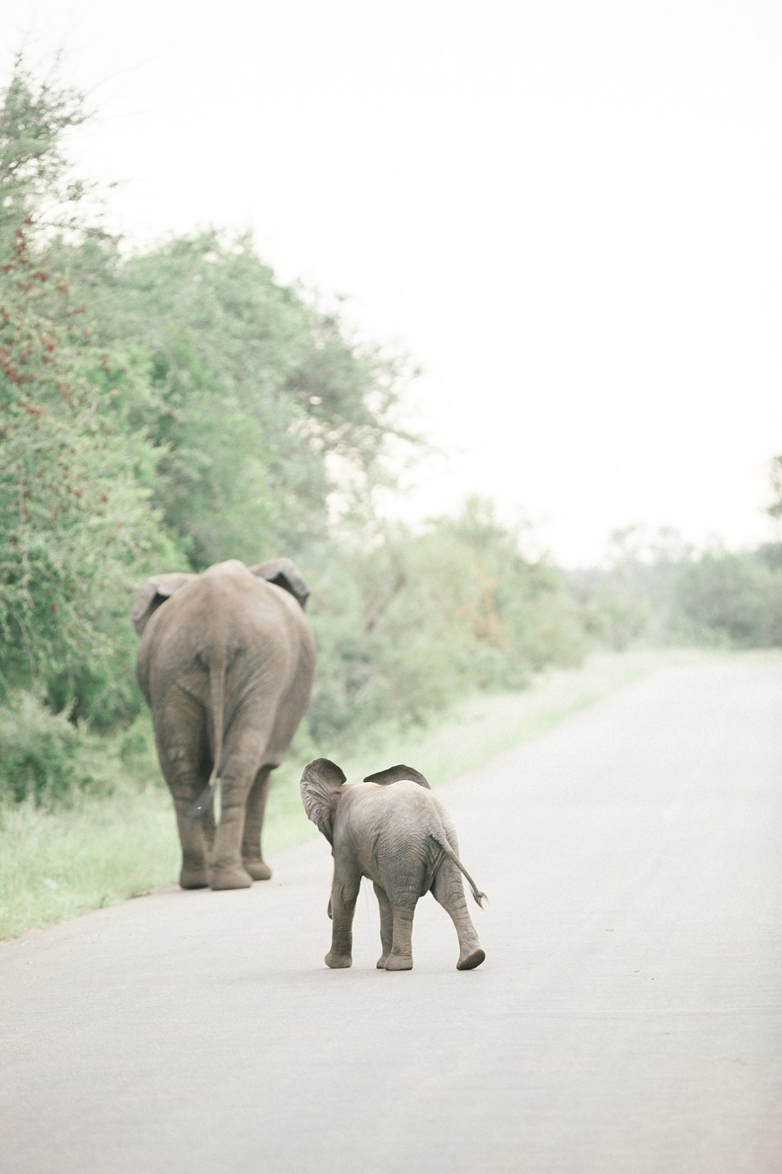 Elephant family at Kruger National park