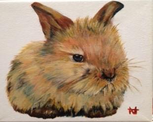 "Baby rabbit, ""Bobby"""