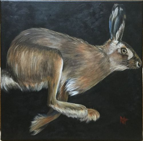 Harrier the hare