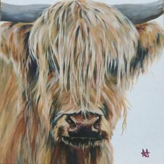 Golden highland cow