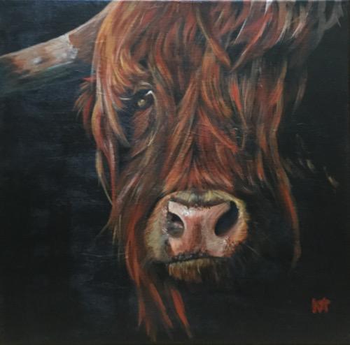 Red - Highland bull