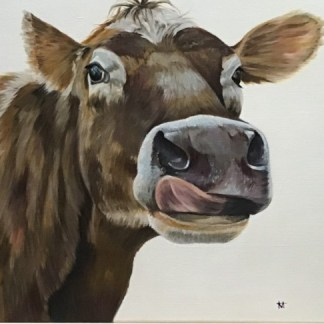 Jersey cow licking her nose