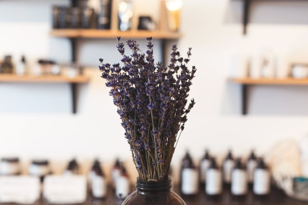 How to dry lavender flowers 2