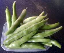 Broad bean The Sutton