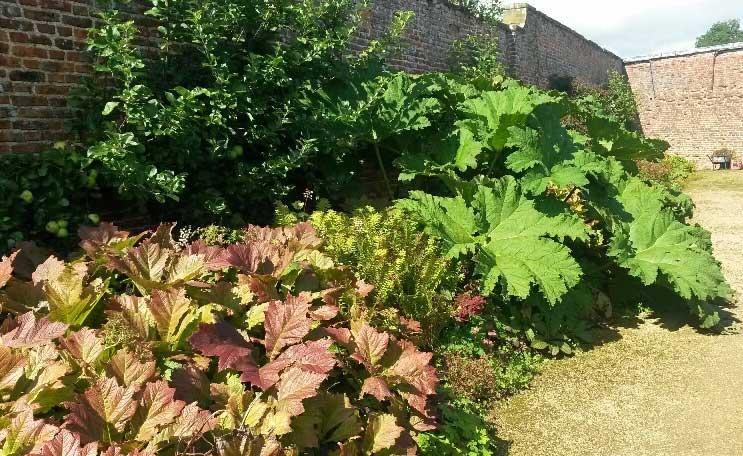 Big Leaved Plants Mandycanudigit