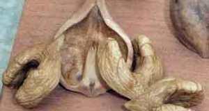 Heartnut