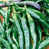Chilli pepper Chilaca