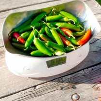 Chilli pepper Serrano