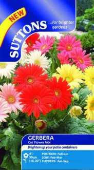 Gerbera Cut Flower Mixed