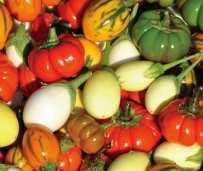 Solanum Deco Fruits Mixed. Picture; Thompson & Morgan