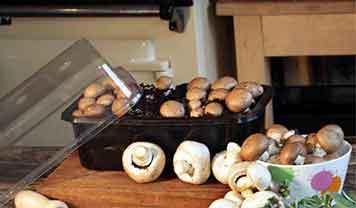 Mushroom Windowsill Kit.