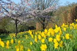Rosemoor spring