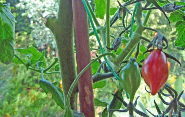 Tomato Artisan Mix