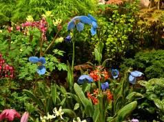 Harperley Hall Farm Nurseries' trademark poppies