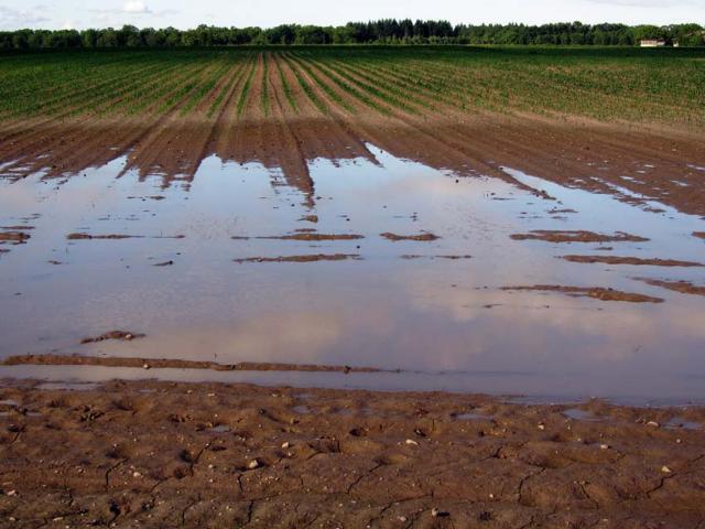 Flooded arable field