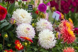 RHS Hyde Hall Flower Show