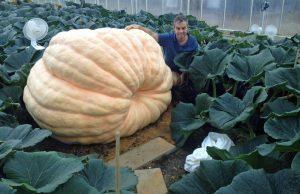 'Baby' pumpkin and champion grower Ian Paton