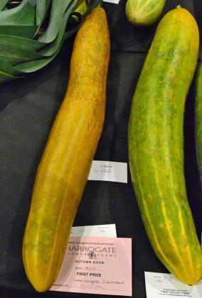 Cucumber 1st