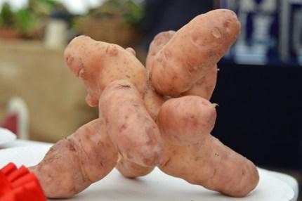 First place... Pink Fir Apple potato