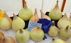 Shields Row Allotment Association's giant onions