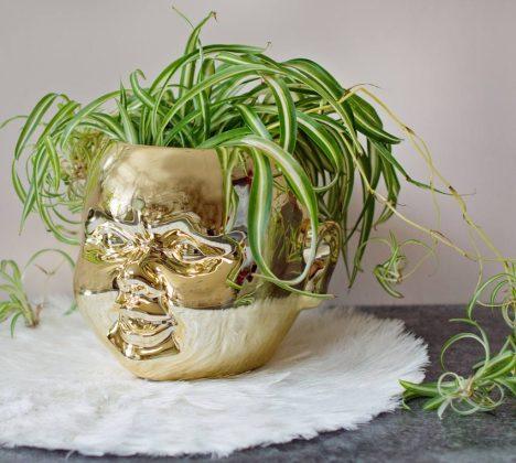 Gold doll's head planter. Picture; AUDENZA